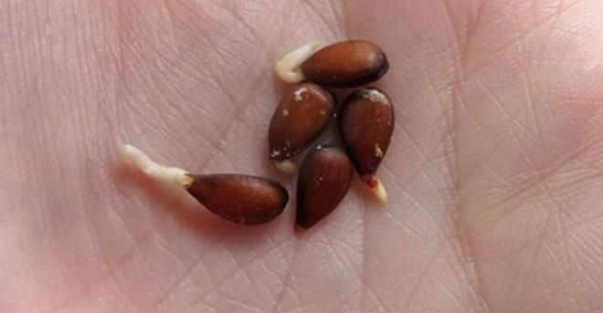 Яблоки, семена, рак: Что врачи скрывали от нас буквально десятки лет