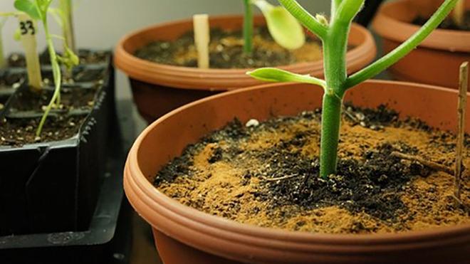 Вот это да! Именно это произойдет после того, как ты добавишь ложку корицы в горшок к растению