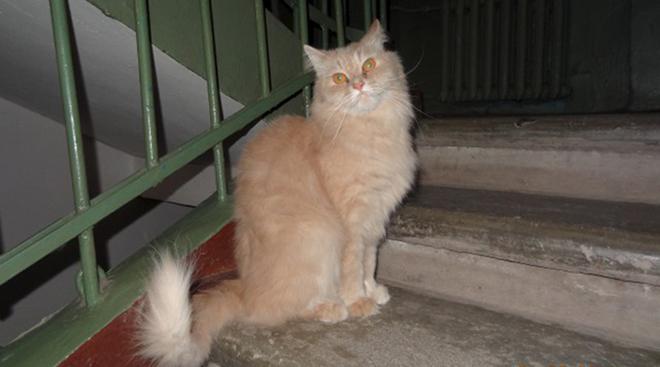 Хозяева выбрасывали кота в подъезд и лупили, но я решил их за это проучить