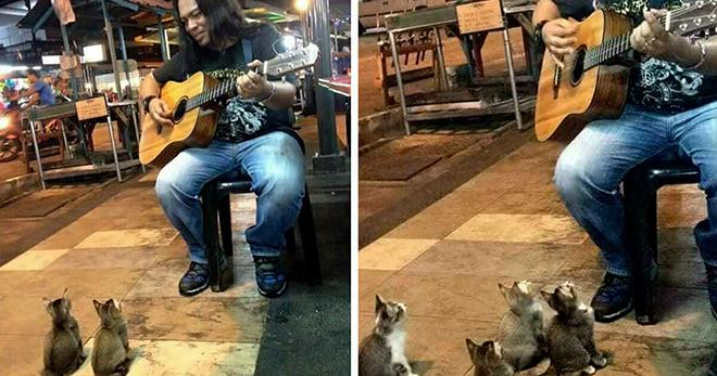 На уличного музыканта совсем не обращают внимания прохожие, но вскоре появляются необычные поклонники
