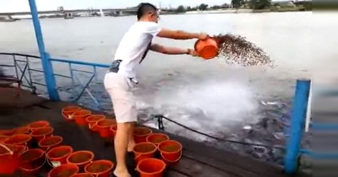 Парень бросил в воду 23 ведра корма для рыб. Дальнейшее не передать словами!