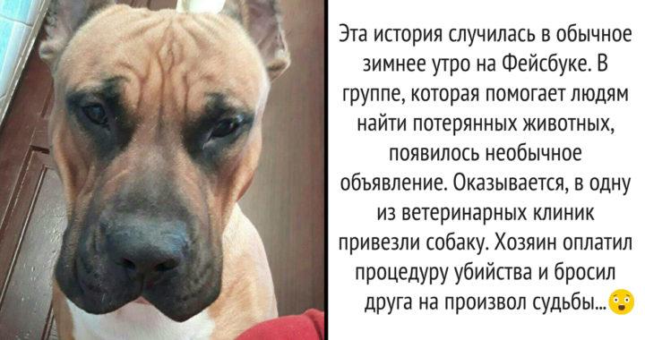 Эту собаку хотел убить хозяин! Я долго боялась дочитывать эту историю до конца