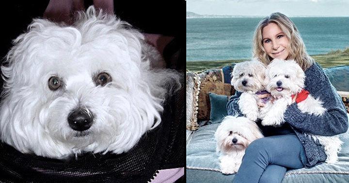 Известная актриса клонировала свою стареющую собаку, так как не представляла свою жизнь без неё