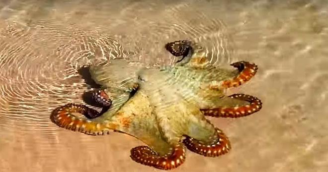 Ребята спасли осьминога от гибели. Он вернулся на следующий день и отблагодарил их!