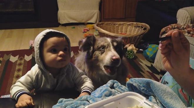 """Родители долго просили кроху: скажи """"мама"""", и получишь нямнямку! И тут собака не выдержала… Случилось то, от чего все смеялись до слёз!"""