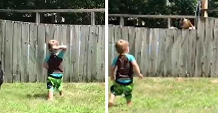 2-летний малыш кидает мяч через забор во дворе дома — через несколько мгновений на камеру попадает тот, кто…