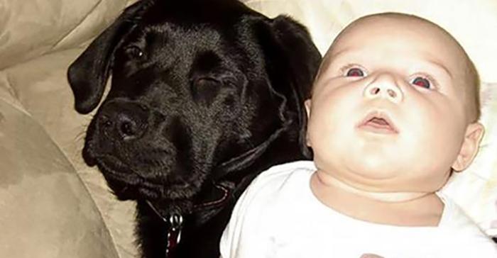 """""""Я просила сестру не дарить щенка моей новорожденной дочке. Меня не послушали, и вот чем это все закончилось…"""""""