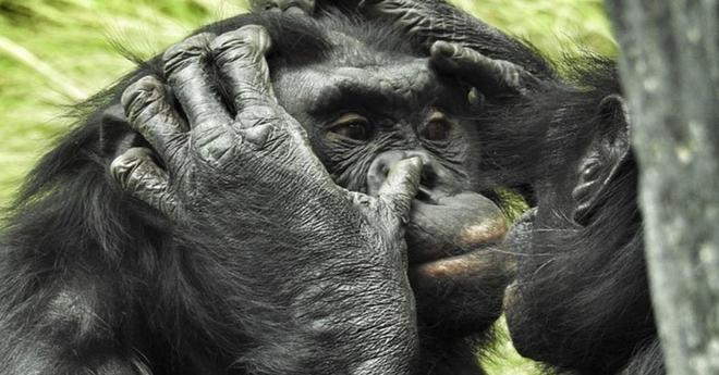 В животном мире до сих пор еще полно сюрпризов, и всё есть, чем удивить человека
