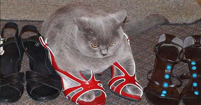 Эти фотографии доказывают: коты смогут найти своё счастье где угодно