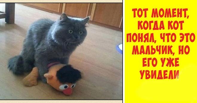 Тот самый момент, когда кот понял, что его засекли на месте преступления