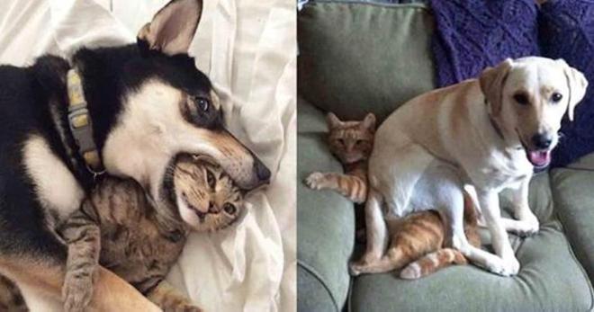Эти кошки и собаки всё же смогли найти общий язык и подружиться