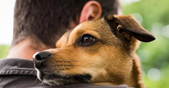 Долгих 7 месяцев он не мог найти свою собаку, и вот их встреча