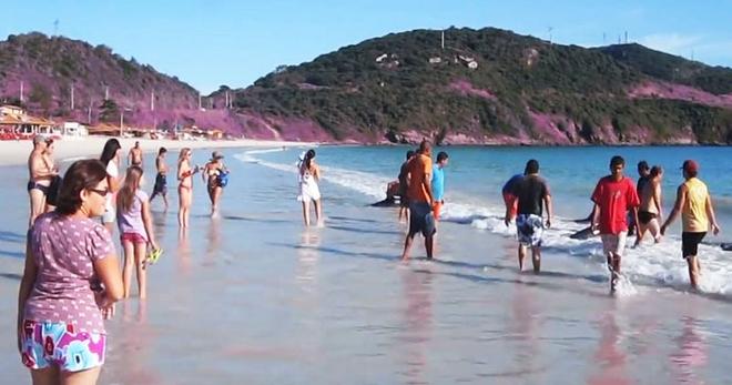 Туристы просто отдыхали на пляже, и даже подумать не могли, что в воде могут появиться они