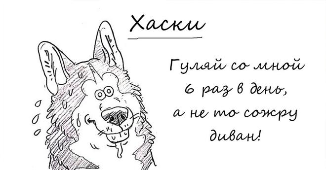 Весьма забавный справочник по лучшим и худшим чертам собак всех пород