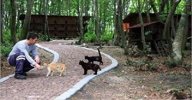 Маленький город, построенный только для бездомных кошек!