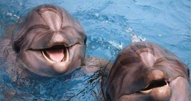 Индия стала первой страной, признавшей дельфинов личностями