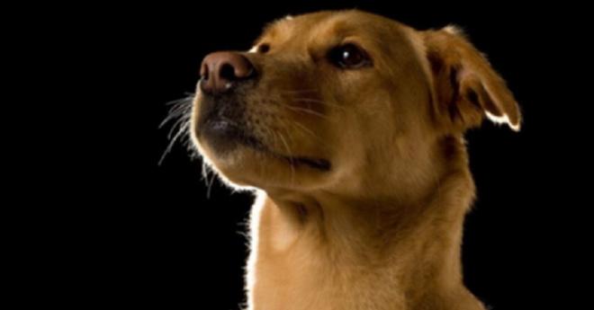 Чудесные фотографии беспородных собак, которые сделаны с любовью