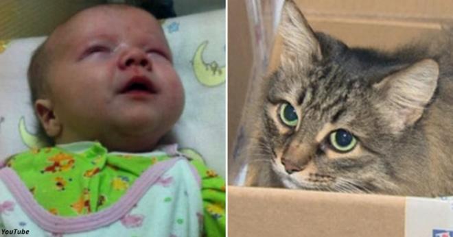 Ребёнка оставили в подвале — и долгие часы его согревала только кошка