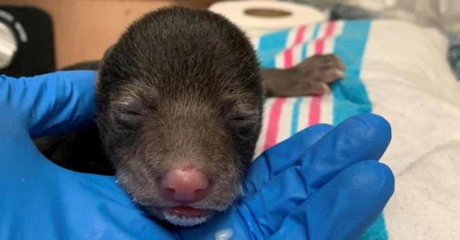 Собака принесла домой осиротевшего щенка, но хозяева заподозрили, что это не щенок
