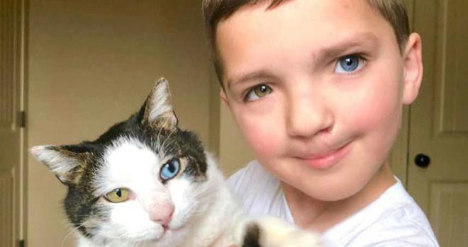 Мальчик с разным цветом глаз взял из приюта кота с такими же необычными глазами