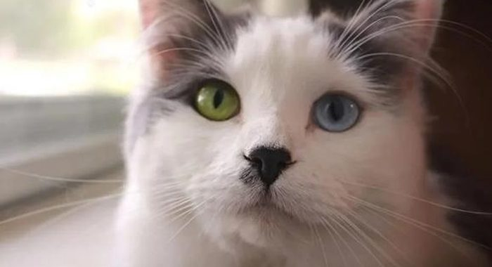 Молодая пара нашла на улице бездомную кошку с необычными глазами и забрала её к себе домой