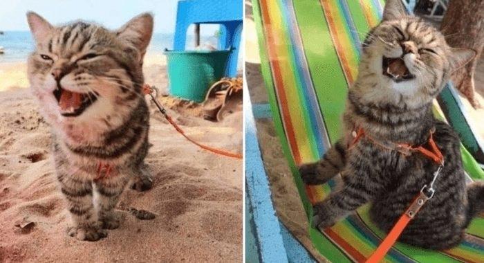 Котенок впервые на пляже: улыбка до ушей!