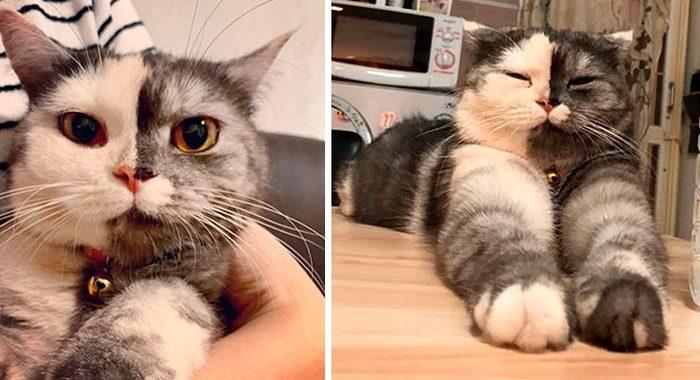 Эта кошечка выглядит, как нарисованная, но она самая настоящая