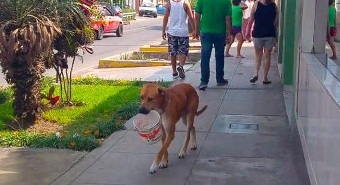 Этот пёс настолько сильно хотел пить, что даже придумал, как попросить у прохожих водички
