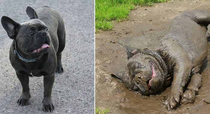 Хорошая собака завсегда грязь найдет! И сразу туда нырнет!