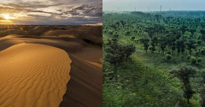 Как китайцы пустыню озеленяли… в течение 60 лет!