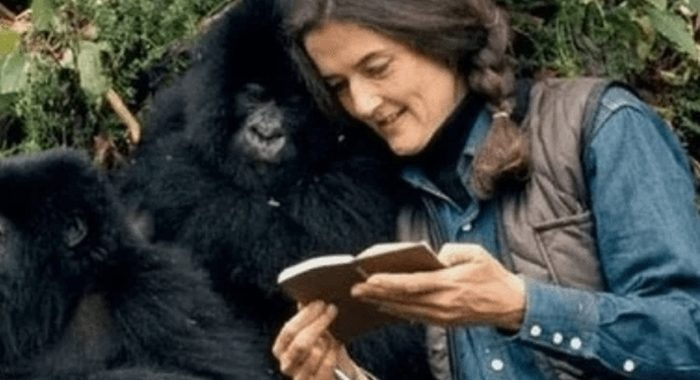 Бесстрашная Дайан Фосси. Она заставила мир полюбить горилл