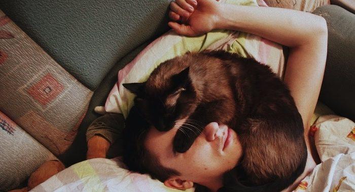 Десять прямых обязанностей каждого домашнего кота