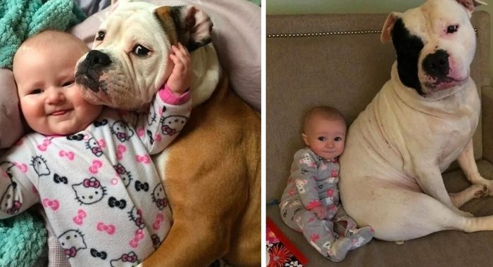 11 фото-доказательств того, что вашему ребенку необходимо домашнее животное