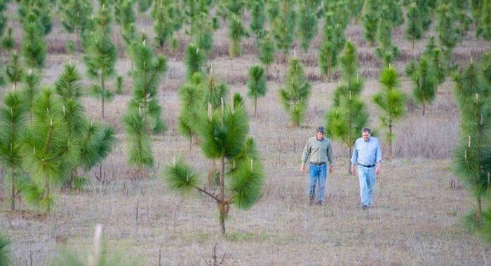Мужчина высадил 8 миллионов деревьев, чтобы восстановить лес, который был вырублен еще в 30-х годах