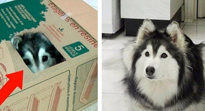 Пса с детства воспитывали кошки, поэтому он ведет себя очень странно